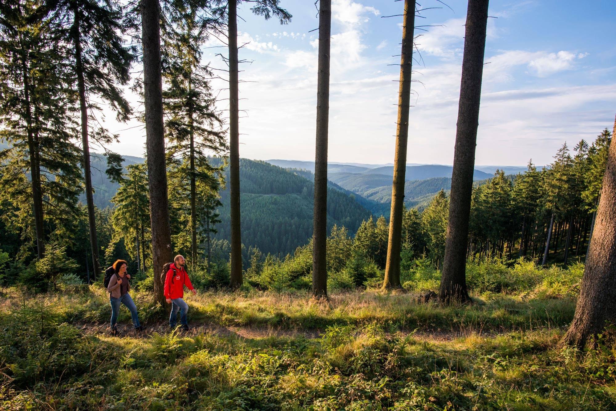 """Wanderer unterwegs auf dem Rothaarsteig. Auch bekannt unter dem Titel """"Weg der Sinne"""", führt der Weitwanderweg auf 154 Kilometern von Brilon im Sauerland bis nach Dillenburg in Hessen. Unterwegs bieten sich traumhafte Aussichten, erstaunliche Naturphänomene und vor allem jede Menge abwechslungsreiche Wanderkilometer auf schmalen Pfaden durch die Natur."""